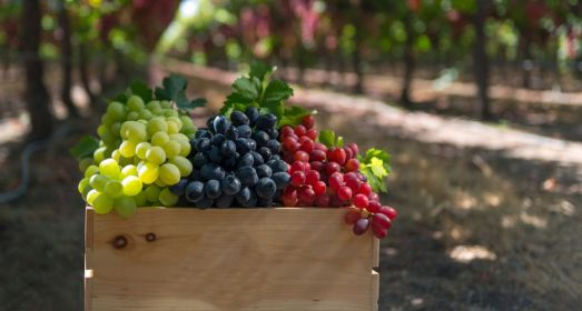 Wine Tour-COLORS AND AROMAS OF WINE